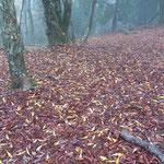 「カナクギ」の絨毯