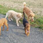 meine Freundinnen, die Terrier Hündinnen