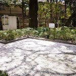 昨夜の雨と風で桜が散って、ふわふわの絨毯みたいになっていたよ