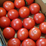 さらに行くと八百屋さんがあるんだよ。そこで見つけたトマト(未良来とかいて「ミラクル」って名前だよ