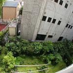 ベランダから下を見ると緑が一杯♪ タンポポのお庭ですw