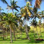 Auch ein schöner Strand mit Palmen hat die Insel zu bieten