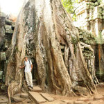 Ta Prohm, einer der spektakulärsten Tempelanlagen von Angkor diente auch schon als Filmkulisse für zum Beispiel Tomb Raider