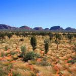 Unterwegs im Uluru Nationalpark