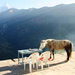 Pferd beim Frühstück