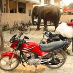 Elefant beim parkieren!