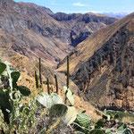 Abstieg in den tiefsten Canyon (3'191 m) der Welt. Eine wirklich anstrengende Sache!!!