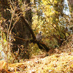 Wenn's dann wieder mal durch den Dschungel ging, sah man Languren. Der kleine weisse Fleck in der Mitte des Fotos ist gemeint! :)