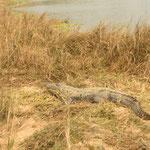 Krokodile wärmen sich in der Sonne