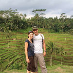 Die berühmten Reisfelder