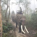 Hoch zu Elefant, die wahscheinlich beste Art den Park zu besuchen.