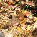 Auch die Affen suchen hier ihr Glück!