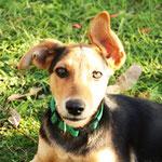 Unser Haushund, lustige Ohren hatte er! :)