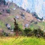 Terrassierte Felder der Bergbauern