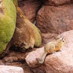 Der Altiplano entwickelte sich, seit diese Region sich mit Beginn des Känozoikums (vor 65 Mio. Jahren) gegenüber der westlichen und östlichen Kordillere stark absenkte, so dass sich kilometerdicke Sedimentablagerungen bildeten.