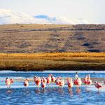 Laguna Nimez mit chilenischen Flamingos