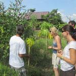 Beim Kochunterricht im Grünen Chiang Mai's