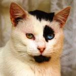 Auch die Katzen sind hier bunter, zumindest die Augen!