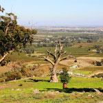 Im Barossa Valley - Eine der vielen wunderbaren Weinregionen Australiens