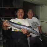 Der Barrakuda, einer der schnellsten Fische die es gibt....