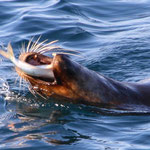 Am Pier von Puerto Madryn. Vom Pier aus kann man den ganzen Tag lang Robben beim Fischfang und Walen beim Spielen zusehen. Nicht schlecht, die hat einen gefagen!!!