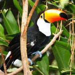 Da man hier nicht weit vom berühmten Pantanal entfernt ist, ich kann man eine riesige Artenvielfalt in den Wäldern bestaunen.
