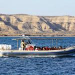 Walbesichtigungstour bei der Península Valdés