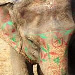 Hübscher Elefant