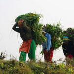Das hohe Gras wird von der Landbevölkerung um den Nationalpark geschnitten. Diese benutzen es für ihre Dächer.