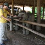 Beim Elefantenspital