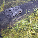 Im Everglades-Nationalpark