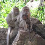 Monkey Familie