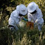 apiculture apiculteur abeille