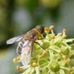 abeille produits de la ruche