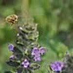 abeille produit de la ruche