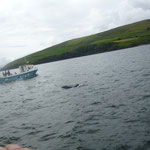 ....findet auch unser Delphin