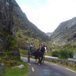 Ab und an kommt uns ein Pferdegespann entgegen......
