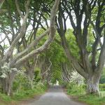 Und wenn wir grade dabei sind: Das sind die Dark Hedges aus Game of Thrones, eine mehr als 250 Jahre alte Buchenallee nahe Ballymoney
