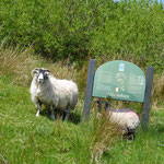 ....und natürlich Schafe......