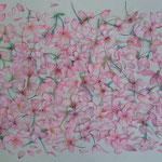 プレゼント ピンク Present pink/2007