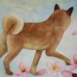 Sky and dog /2008