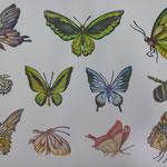 ちょうちょ Butterfly/2014