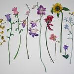 プレゼント 花 Present flower/2013