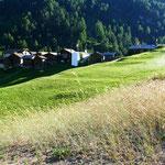 Auf der neu angelegten Ackerparzelle reift erstmals wieder Getreide (Fotos Viktor Perren, Zermatt, 2020).