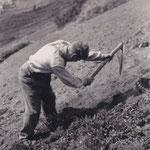 Howwe (hauen, umgraben mit der Spitzhaue) eines Ackers in den Weng, ob dem Bahnhof Zermatt (Foto Theo Frey, 1940er Jahre).