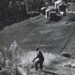 Severin Kronig beim Mähen des Korns in Zmutt (Unbekannter Fotograf, 1940er Jahre).
