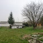 Der Kirschbaum bleibt und wird hoffentlich das Bauprojekt schadlos überstehen.
