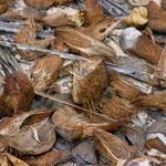 Kokosnusschalen, casca de coco