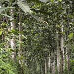 In den Tiefen des Regenwaldes