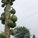 Und noch einmal Papaya